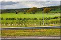 NZ1886 : Saplings at St Leonard's Junction by David Dixon