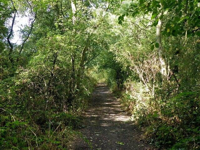 Halloughton Woods