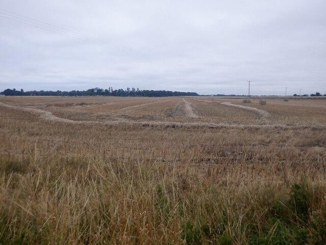 Barley harvest, Kintessack by Richard Webb