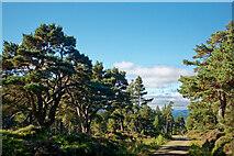 NH9809 : Forestry road through Glen More by Julian Paren
