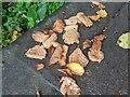 TF0820 : Fallen leaves by Bob Harvey