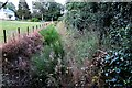 TQ8922 : Vegetated ditch at Rye Foreign by Patrick Roper