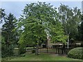 TF0920 : Prunus avium by Bob Harvey