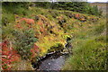 NC3203 : A Bank of Deep Coloured Moss by a Stream, Ross-shire by Andrew Tryon
