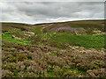 NZ6910 : Ewe Crag Beck by Mick Garratt