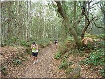 SK1606 : In the northwest corner of Hopwas Hays Wood by Richard Law