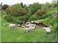 SE1146 : Sheep grazing on Ilkley Moor by Malc McDonald