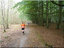 SK1706 : On the climb up through Hopwas Hays Wood by Richard Law