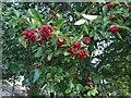 TF0820 : Season of mists and mellow fruitfulness by Bob Harvey