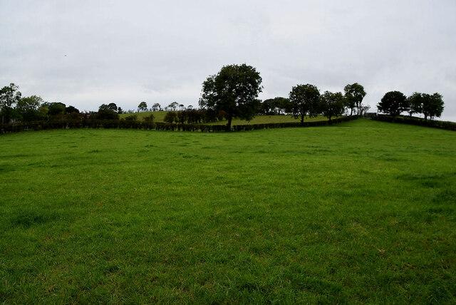 Green fields, Moylagh