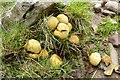 SO0218 : Fungi by Philip Halling