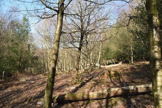 Hallett's Wood