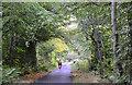 NT4235 : Minor road near Ashiestiel by Jim Barton