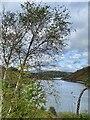SN9187 : Llyn Clywedog through silver birches by Alan Hughes