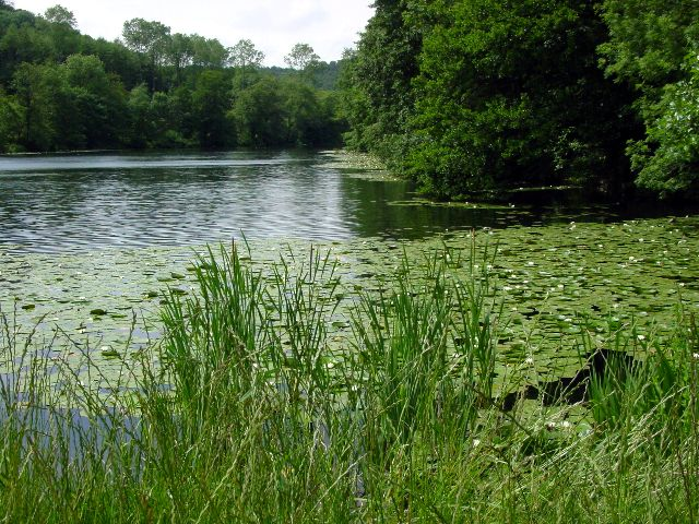Lake at Woodchester Park