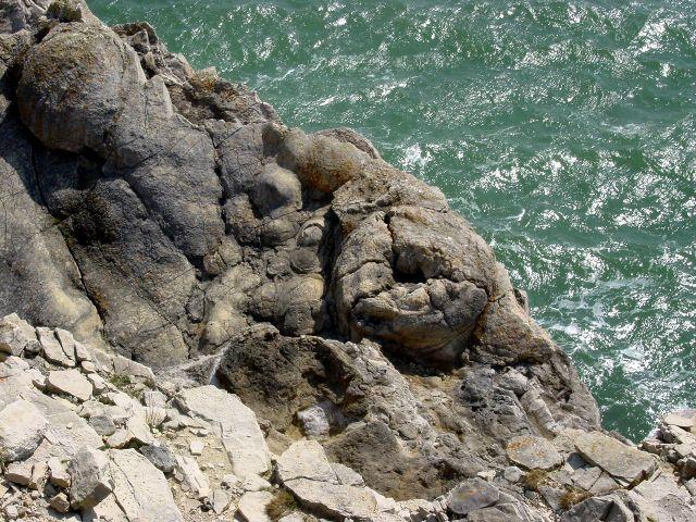 Fossilised tree stumps near Lulworth Cove