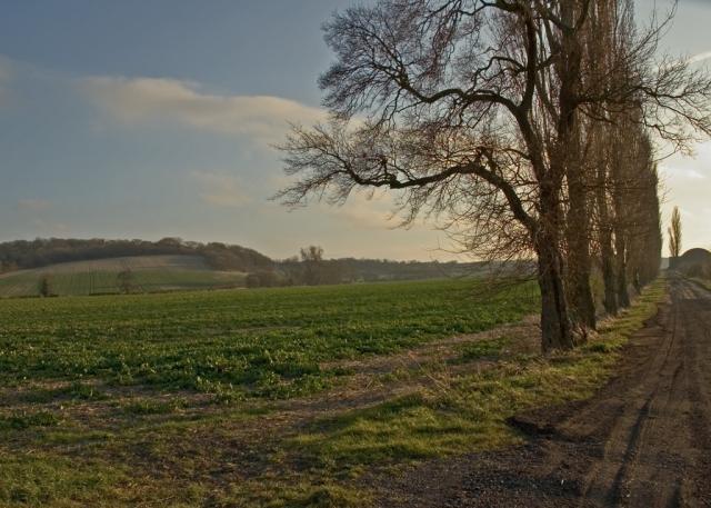 Approach to Dyer's Hall farm and Sundon Hills.