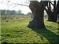 TQ1974 : Richmond Park (near Bog Lodge) by Richard Howell