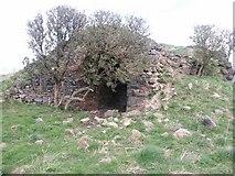 NU1535 : Old lime Kiln near Kiln point near Budle. by Dysdera