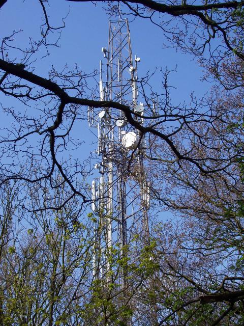 Colwick Wood Mast