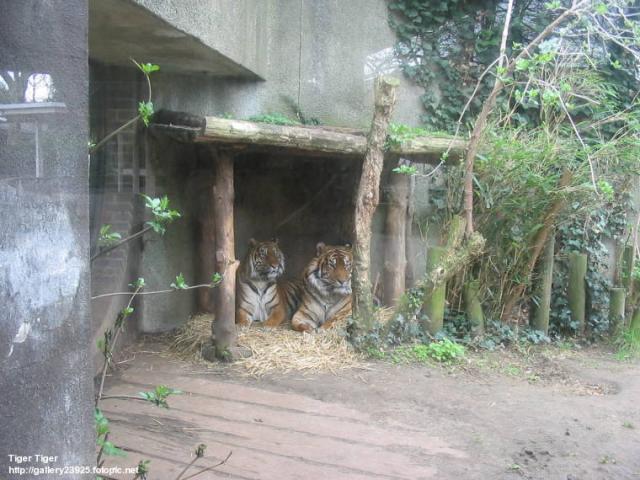 London Zoo in Regent's Park