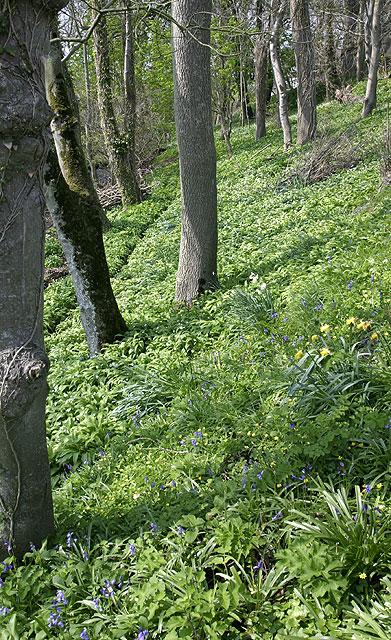 Woodland below Ballakilpheric