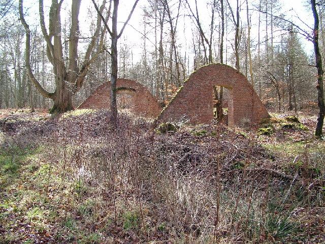 Savernake Forest Nature Reserve