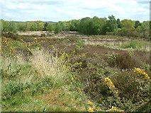 SU0708 : Verwood, Dewlands Common by Stuart Buchan