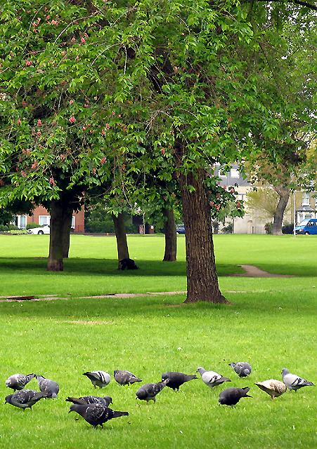 Turnham Green Park