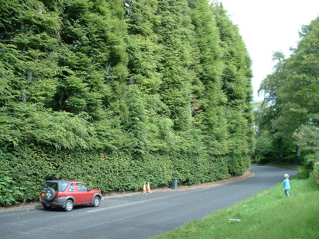World's Tallest Hedge