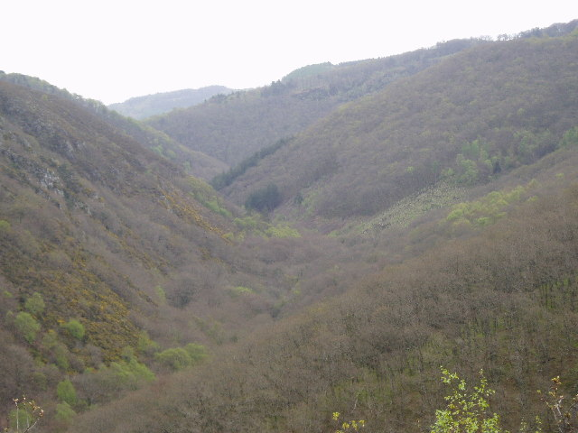 Teign Valley - looking towards Fingle Bridge