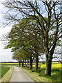 TA2129 : Trees on side road off Weghill Road by Andy Beecroft