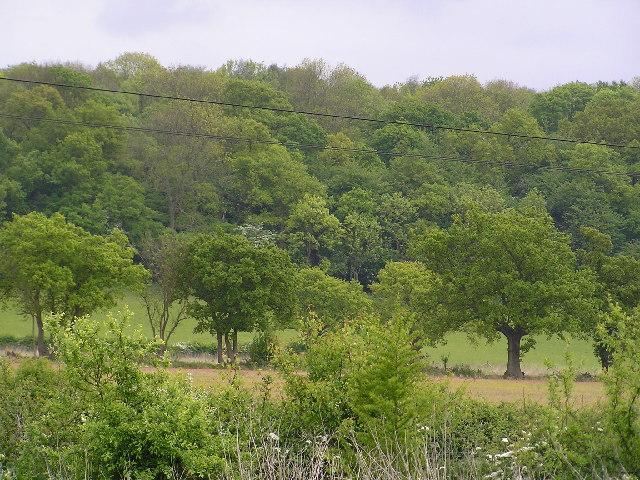 Weethley Wood