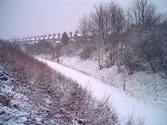 View of the Park in winter