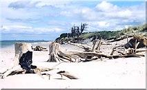 NJ0064 : Coastal erosion at Culbin by Anne Burgess