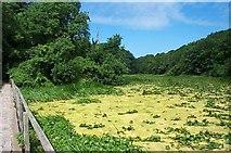 SR9694 : Bosherton Lily Ponds by Garth Newton