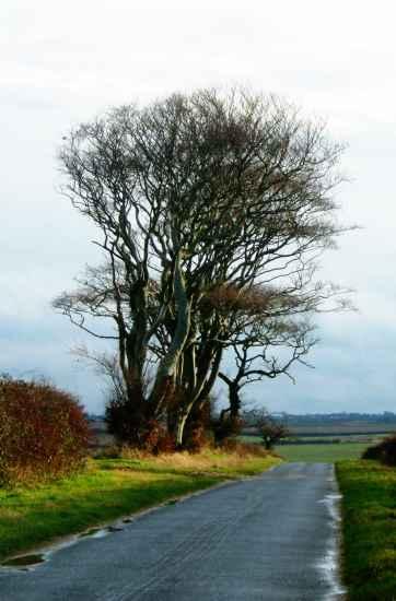 Choseley Road