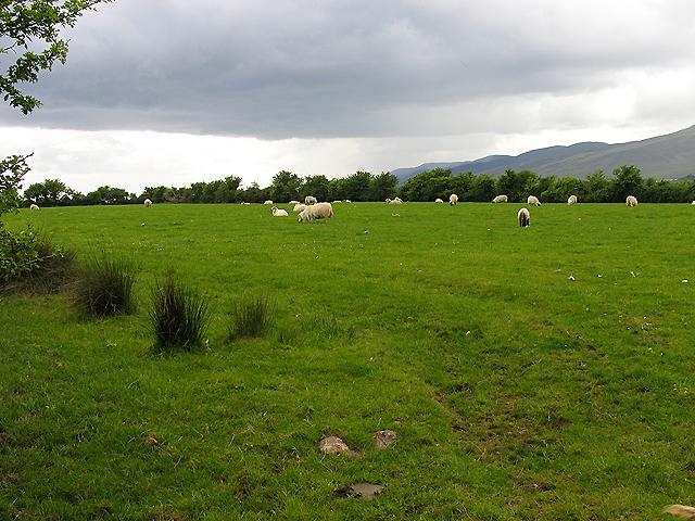 Pasture near Keel