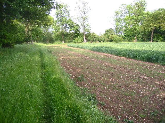 Hertfordshire way near Wallington