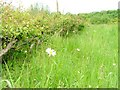 NZ4522 : Layered Hedge and Meadow, Billingham Beck Valley Country Park by Mick Garratt