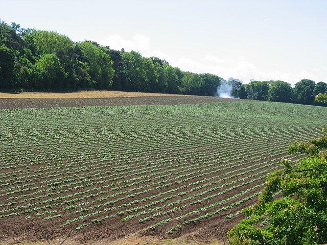 Potato field, Setonhill