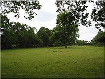 SU6466 : Burghfield Common by Darren Smith