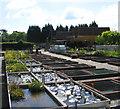 TQ5393 : Tisbury Aquatic Nursery, Noak Hill, Essex by John Winfield