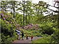 NU1713 : Hulne Park by Ray Byrne