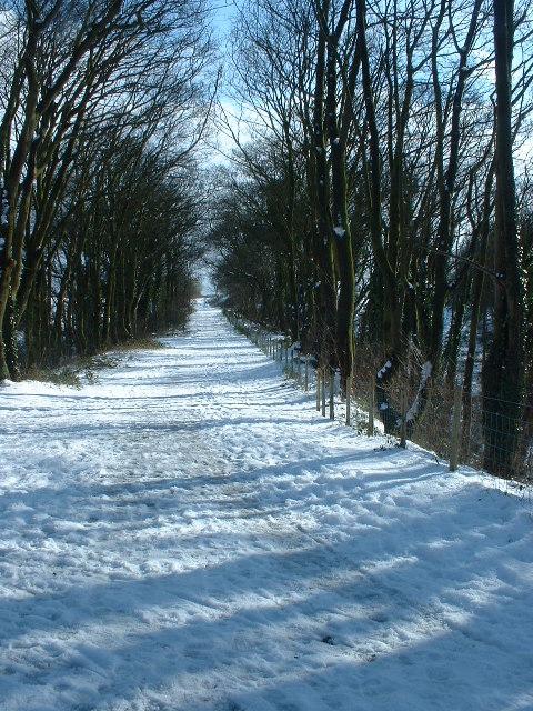 The Old Railway Line