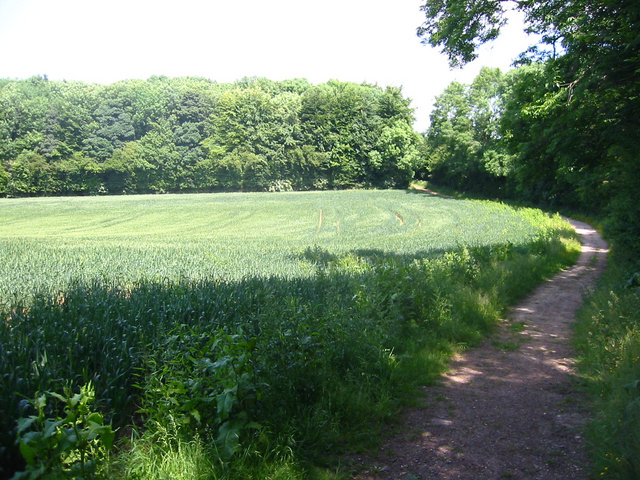 Stonesley and Harbourclose Woods, near Graveley