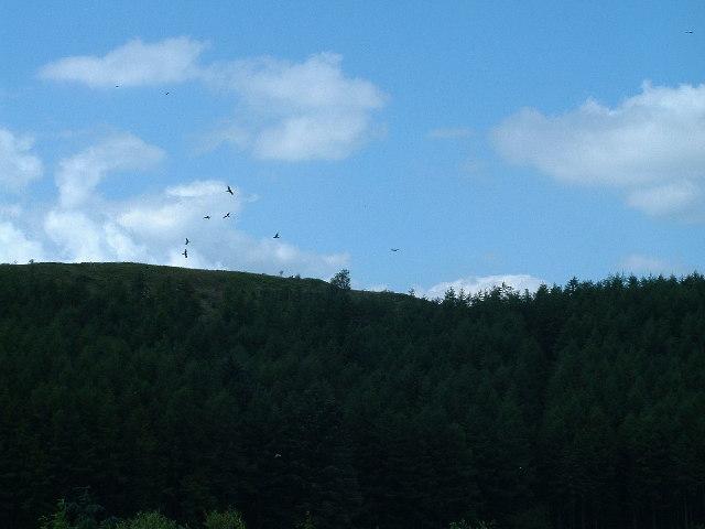 Kites against the sky