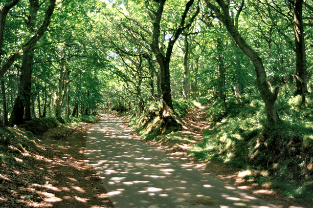 Road Country Lane in the Northern Quantocks