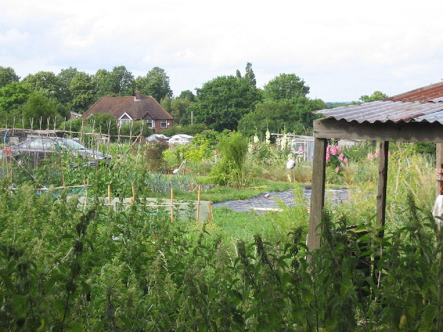 Armour Hill Allotments