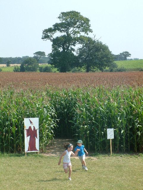 Maize Maze at Metton